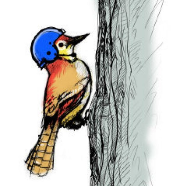 woodpecker helmet