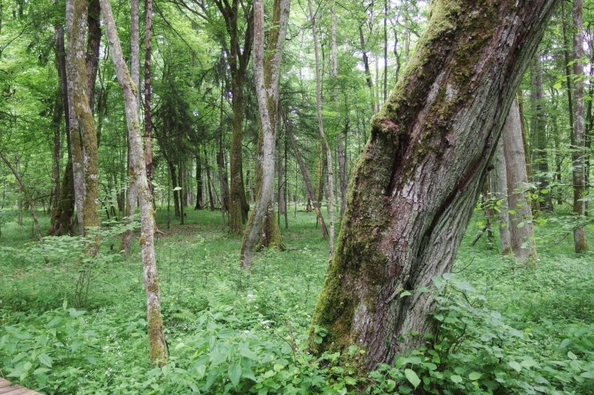 Light gaps in mature forest