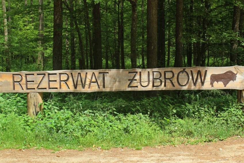 Bison reserve, Bielowieza, Poland