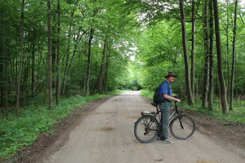 Forest road near Bielowieza