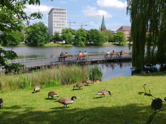 Canada Geese in Kiel, Germany park