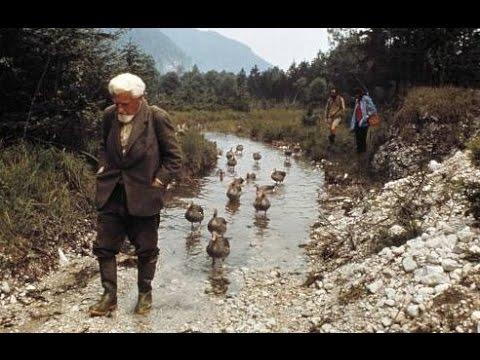 Konrad Lorenz and imprinted geese