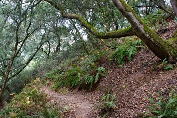 Huckleberry Botanical preserve, Oakland CA