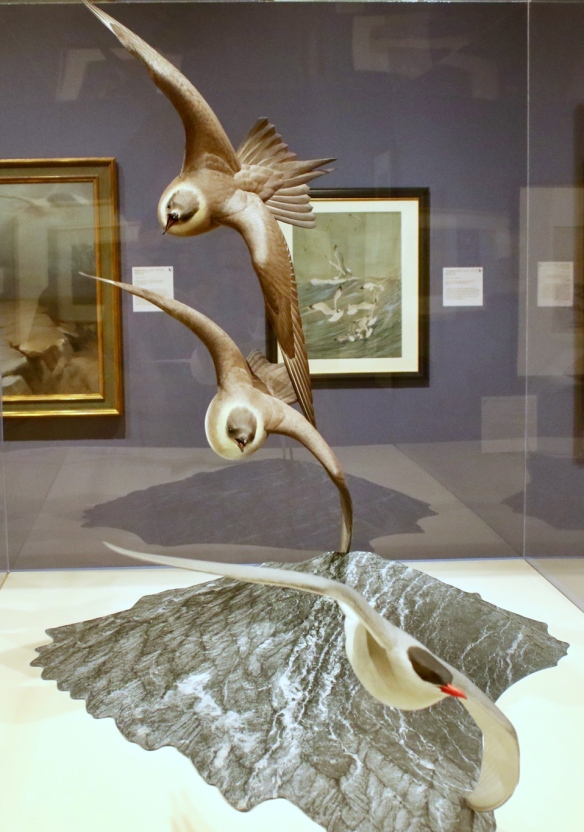 Bird art at the Leigh Yawkey Woodson art museum, Wausau, WI