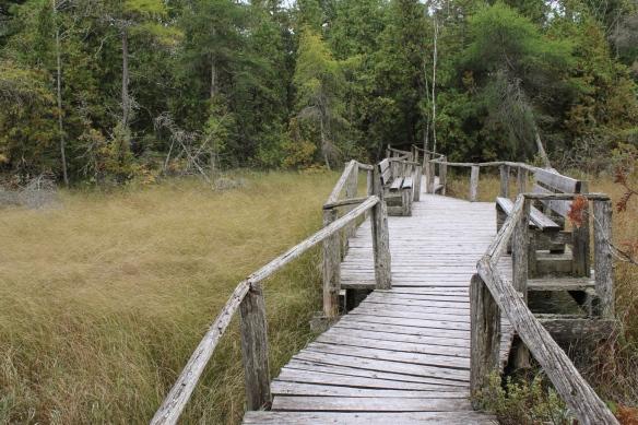 The Ridges Sanctuary, Baileys Harbor, Door County, WI