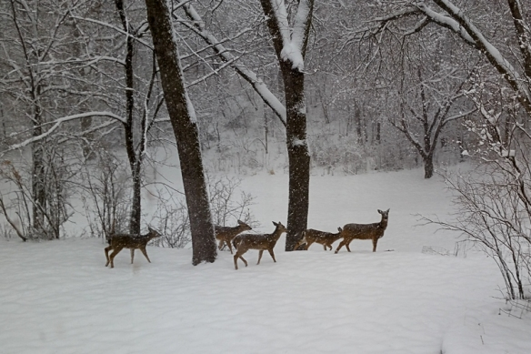 deer-herd-in-the-snow-