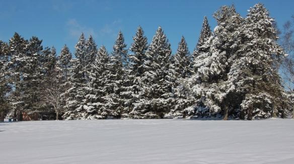 northern Minnesota-February