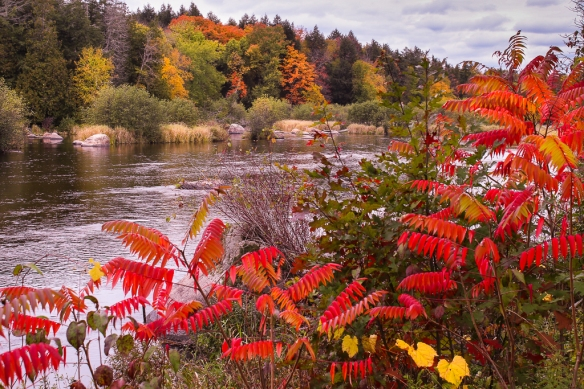 wolf-river-wisconsin-