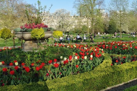Tulips in Regents Park, London