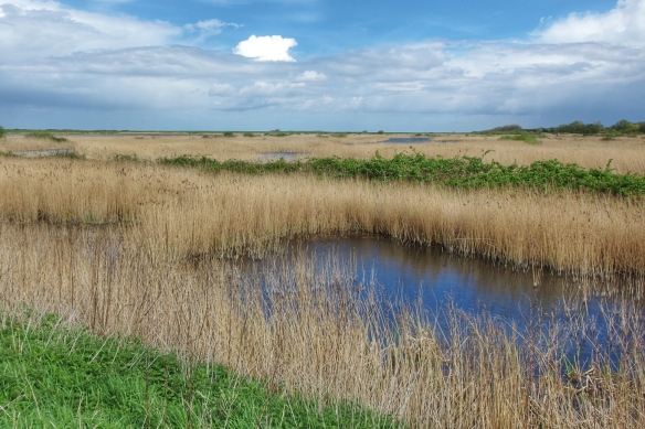 Marshes along the Norfolk coast, UK