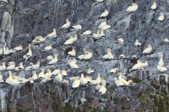 Bass Rock, near North Berwick, Scotland