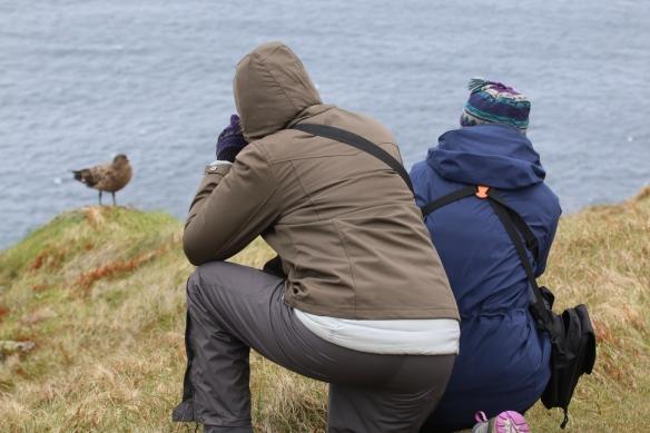 Photographing Great Skua on Handa Island Wildlife Reserve, Scourie, Scotland