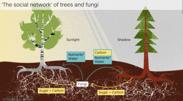 How do trees talk to each other