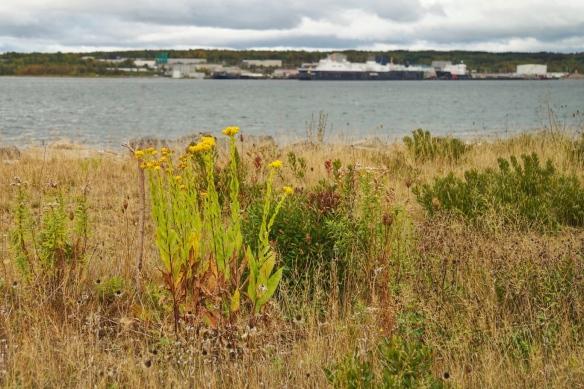 Muggah Creek estuary, Open Hearth Park, Sydney, Nova Scotia