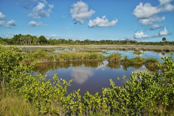 Blackpoint Drive wildlife refuge, Titusville FL