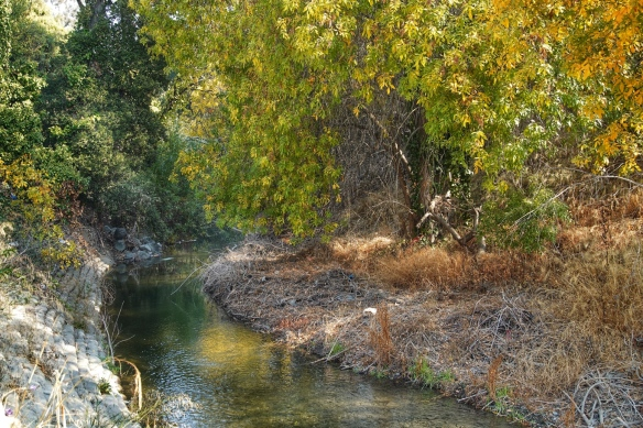 Los Gatos creek, Campbell Park, San Jose, CA