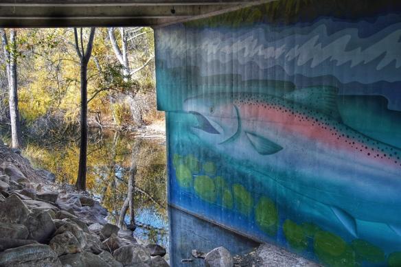 Los Gatos creek, Campbell Park, San Jose, CA