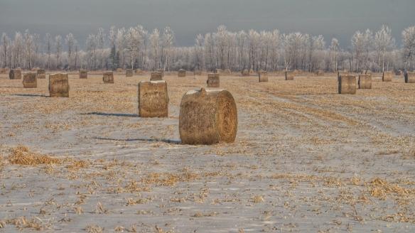 Cropland in Sax-Zim bog, MN