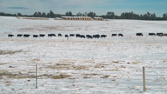 SouthDakota prairie farm