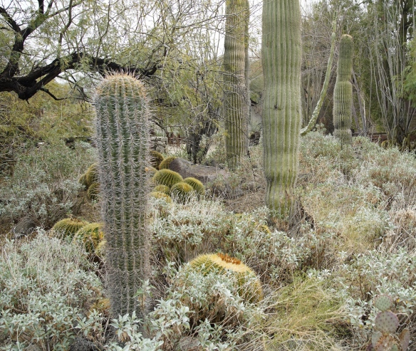 Sonoran desert at Palm Desert, CA