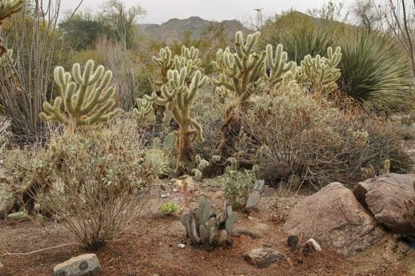Living Desert Zoo, Palm Desert, CA
