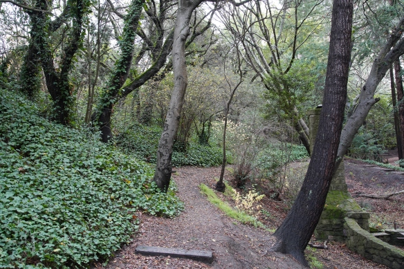 A forest trail, Oakland CA