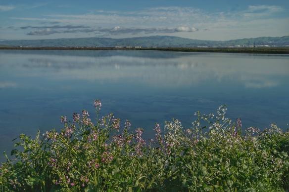 Alviso marina county park
