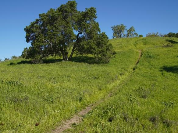 Santa Teresa county park, San Jose CA