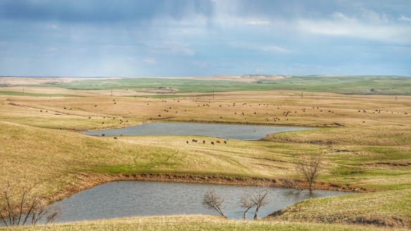 Flint hills near Bazaar cattle ranch, Kansas