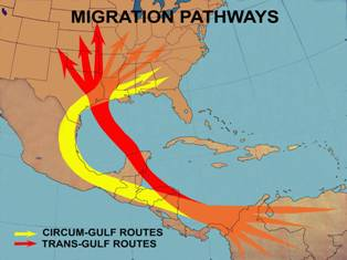 Route of trans-Gulf bird spring migrants